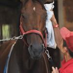 名馬を育てる厩舎や調教師の仕事は何をしている?