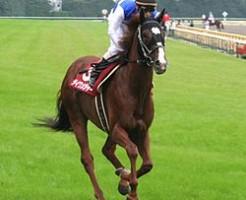 ダイワメジャー産駒 代表馬